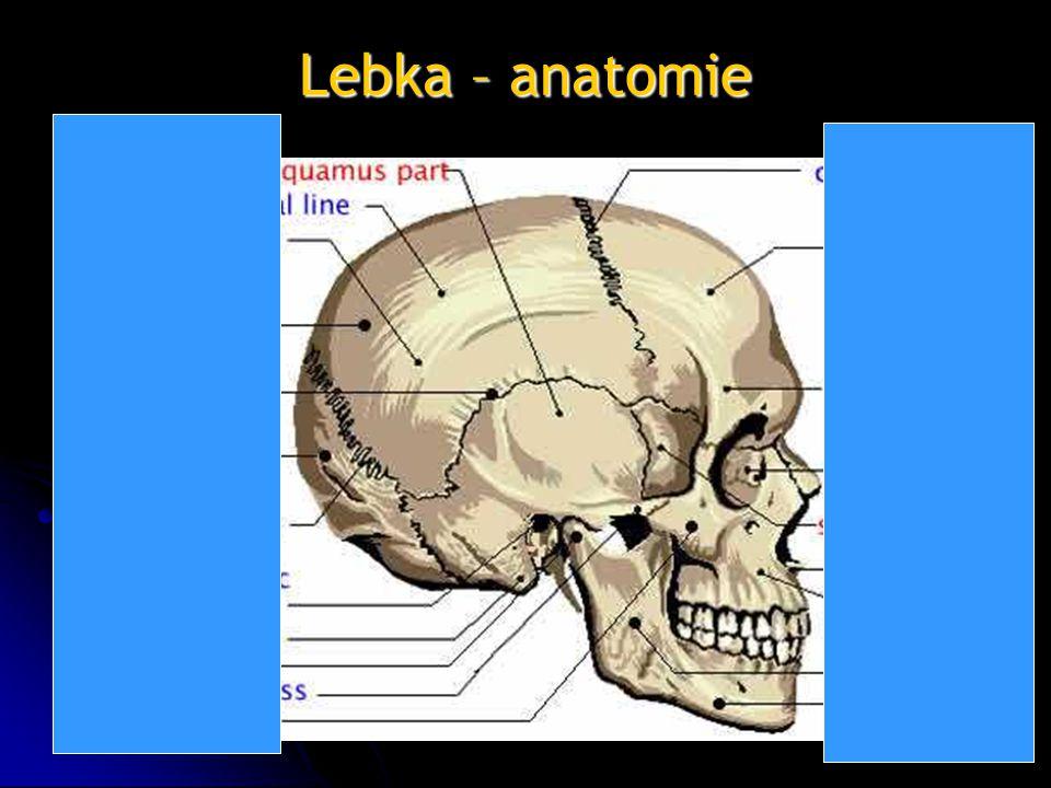 Lebka – anatomie
