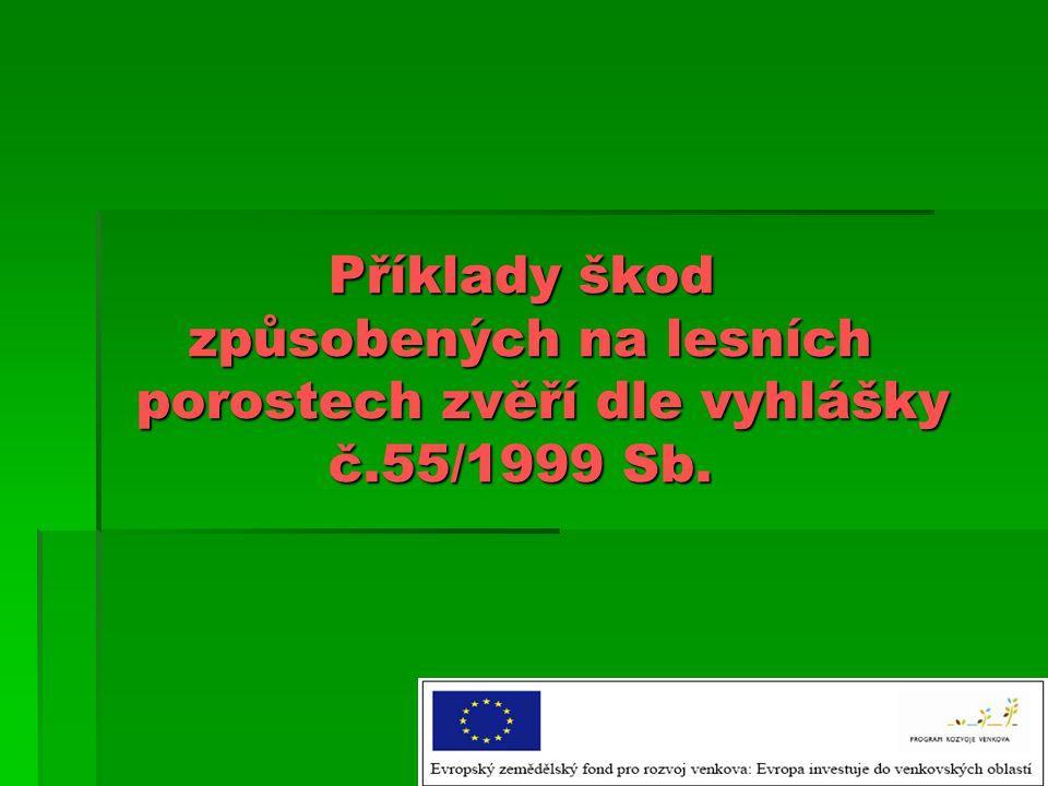 Příklady škod. způsobených na lesních. porostech zvěří dle vyhlášky. č