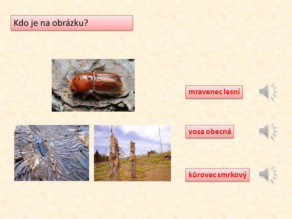 Kdo je na obrázku mravenec lesní vosa obecná kůrovec smrkový