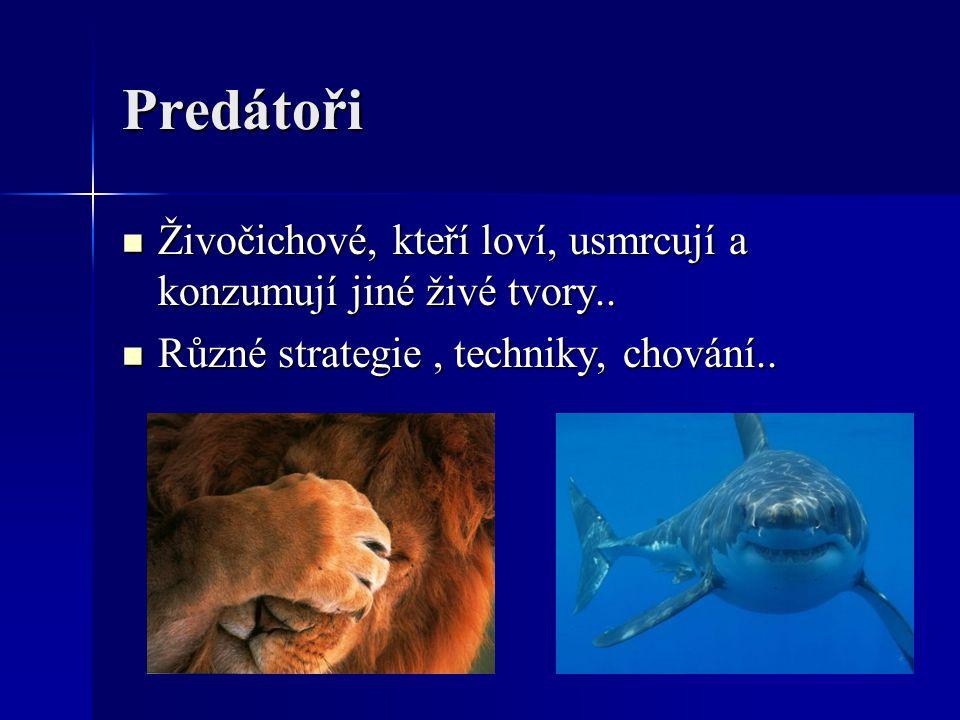 Predátoři Živočichové, kteří loví, usmrcují a konzumují jiné živé tvory..