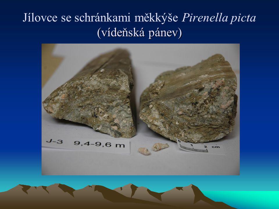 Jílovce se schránkami měkkýše Pirenella picta (vídeňská pánev)