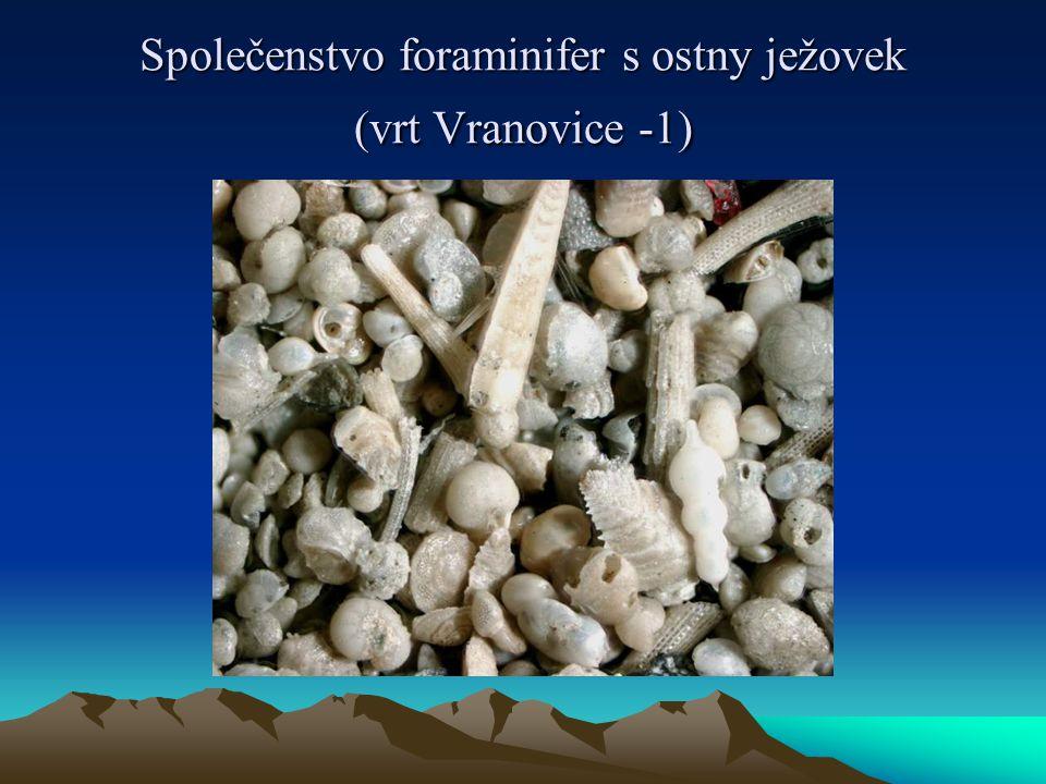 Společenstvo foraminifer s ostny ježovek (vrt Vranovice -1)