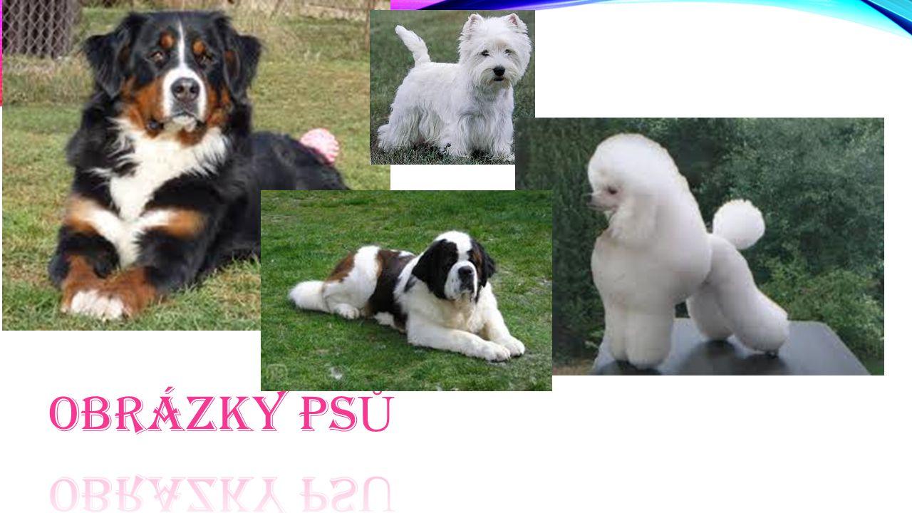 Obrázky psů