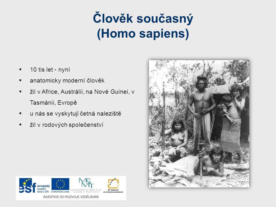 Člověk současný (Homo sapiens)