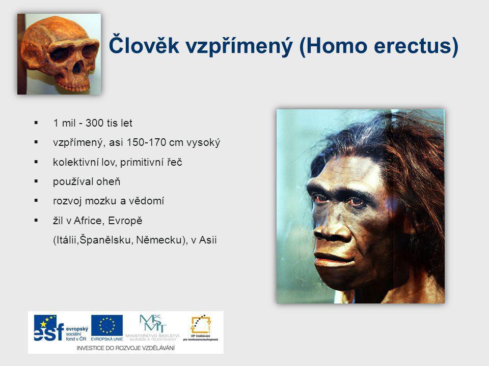 Člověk vzpřímený (Homo erectus)