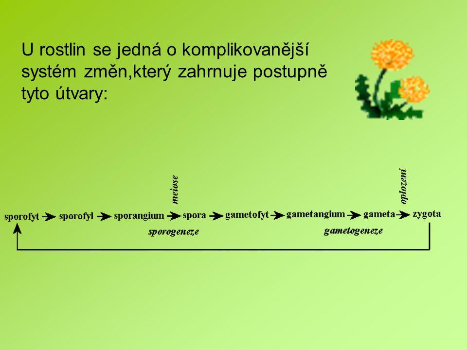 U rostlin se jedná o komplikovanější systém změn,který zahrnuje postupně tyto útvary: