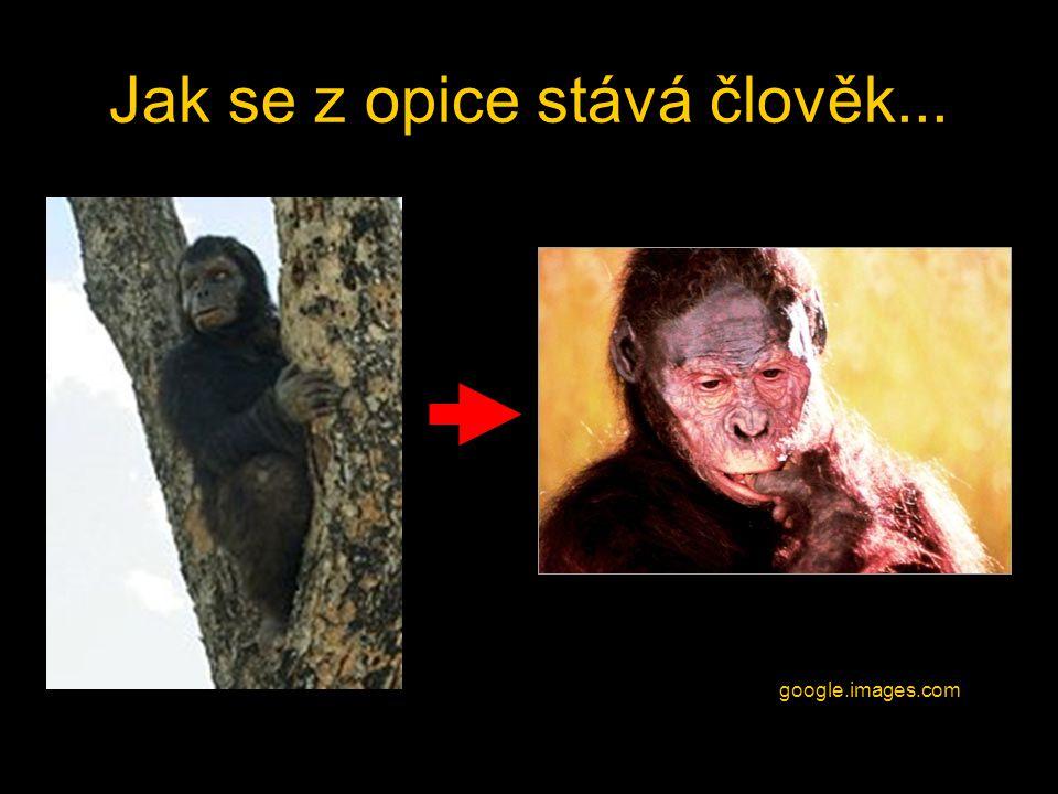Jak se z opice stává člověk...
