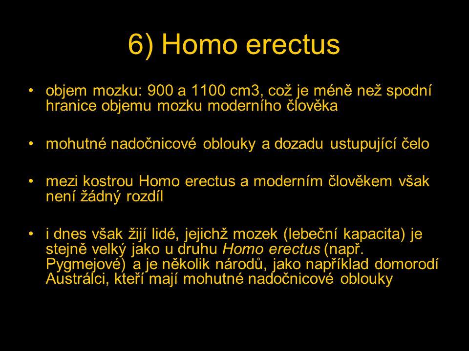 6) Homo erectus objem mozku: 900 a 1100 cm3, což je méně než spodní hranice objemu mozku moderního člověka.