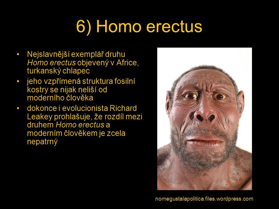 6) Homo erectus Nejslavnější exemplář druhu Homo erectus objevený v Africe, turkanský chlapec.