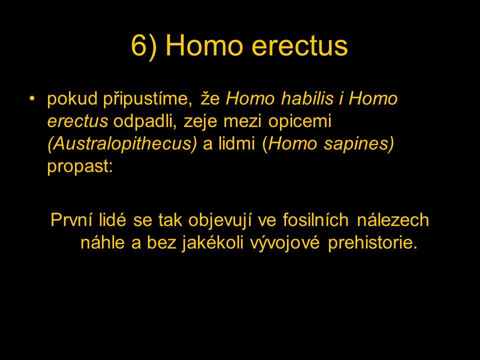 6) Homo erectus pokud připustíme, že Homo habilis i Homo erectus odpadli, zeje mezi opicemi (Australopithecus) a lidmi (Homo sapines) propast:
