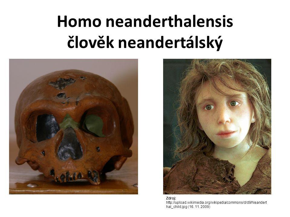 Homo neanderthalensis člověk neandertálský