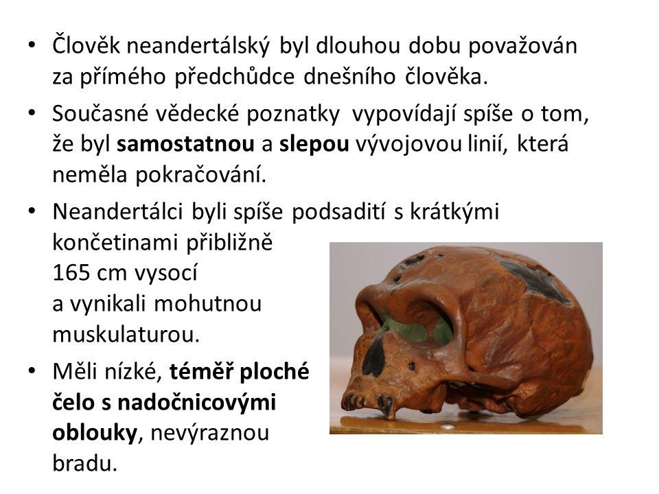 Člověk neandertálský byl dlouhou dobu považován za přímého předchůdce dnešního člověka.