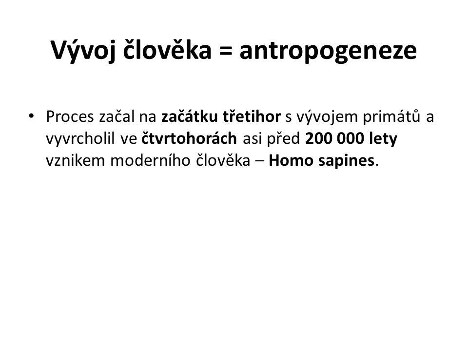 Vývoj člověka = antropogeneze