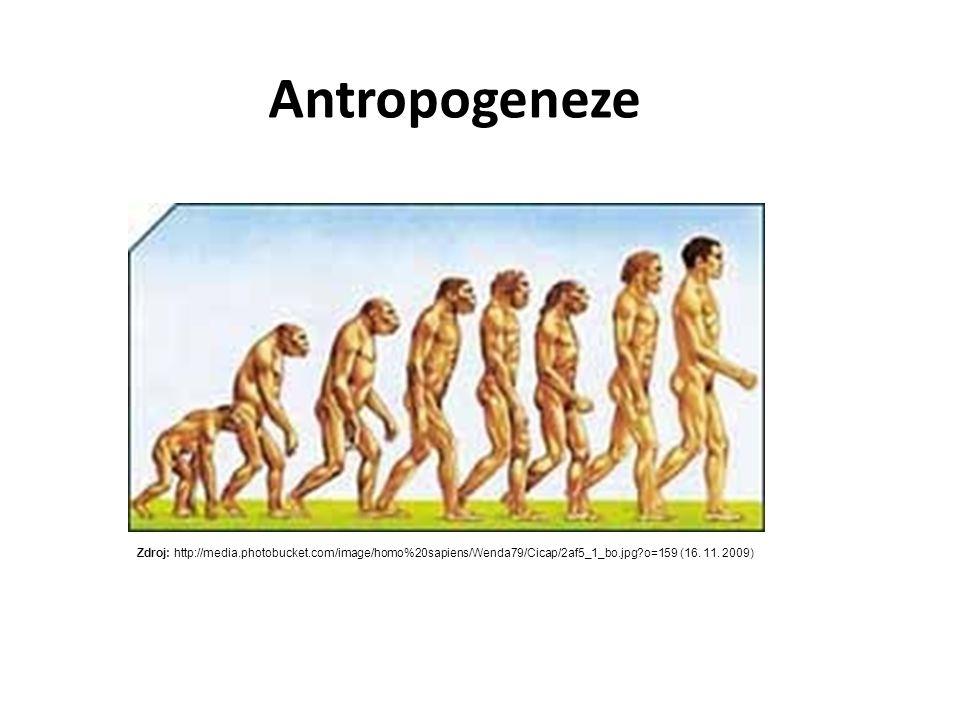 Antropogeneze Zdroj: http://media.photobucket.com/image/homo%20sapiens/Wenda79/Cicap/2af5_1_bo.jpg o=159 (16.