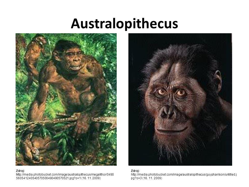 Australopithecus Zdroj: http://media.photobucket.com/image/australopithecus/megalithor/0490560541240540570500490490570521.jpg?o=1 (16. 11. 2009)