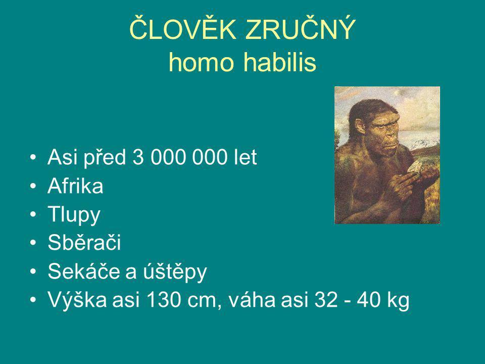 ČLOVĚK ZRUČNÝ homo habilis