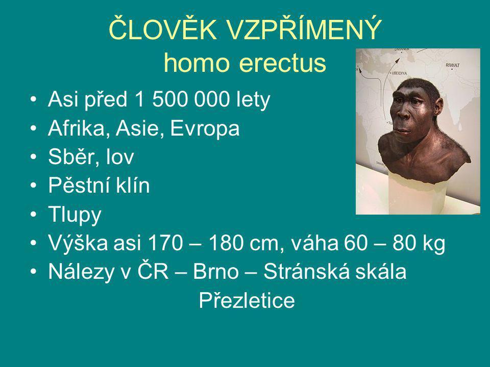 ČLOVĚK VZPŘÍMENÝ homo erectus