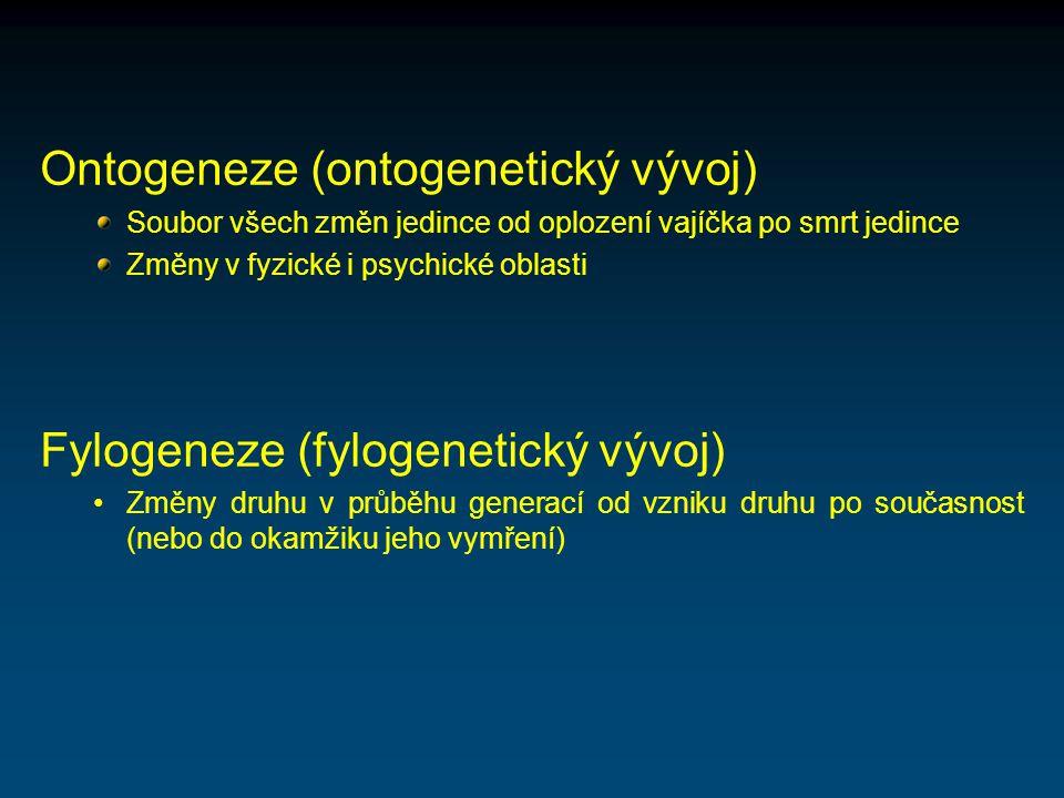 Ontogeneze (ontogenetický vývoj)