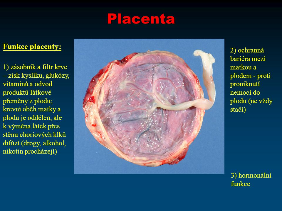 Placenta Funkce placenty: