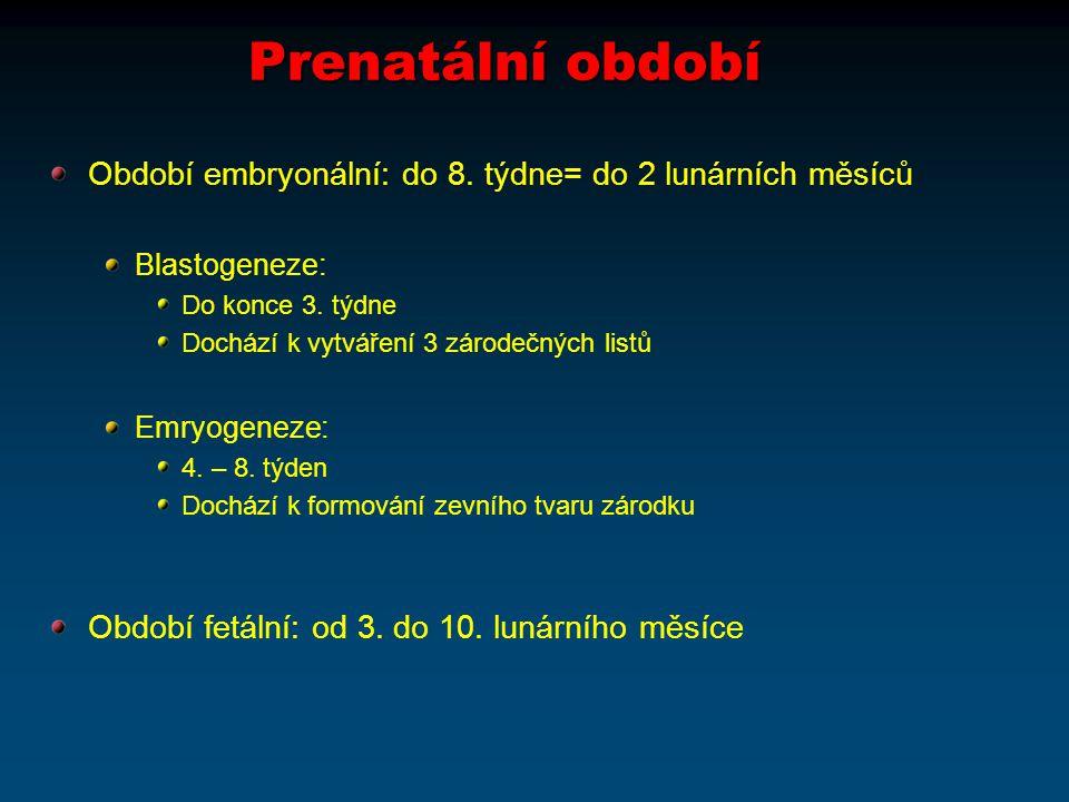 Prenatální období Období embryonální: do 8. týdne= do 2 lunárních měsíců. Blastogeneze: Do konce 3. týdne.