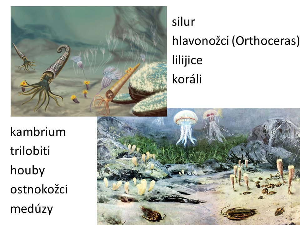silur hlavonožci (Orthoceras) lilijice koráli
