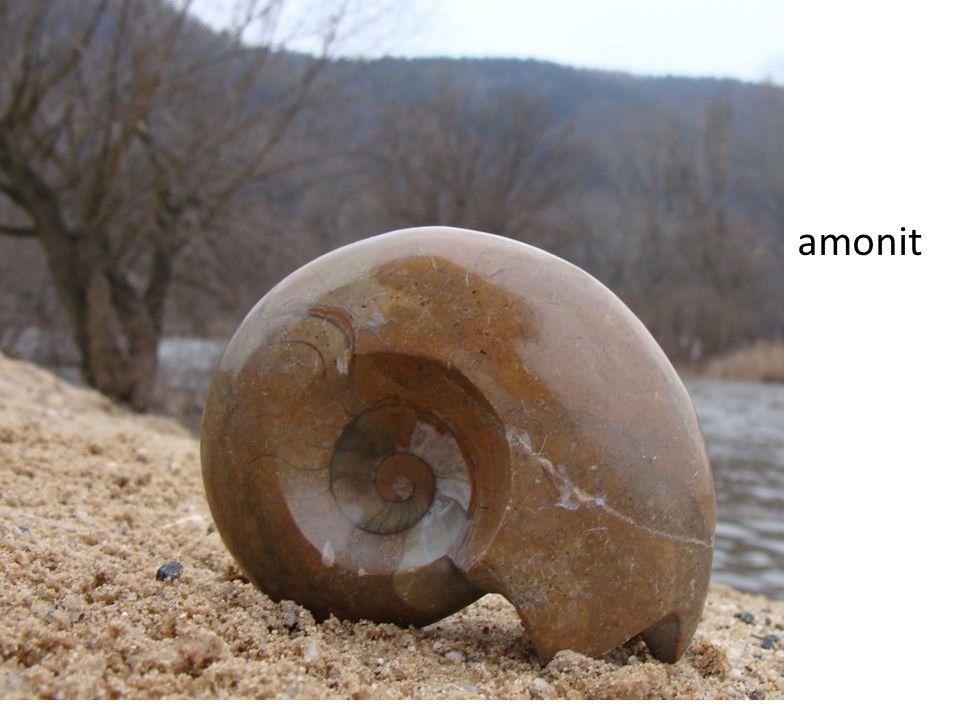 amonit