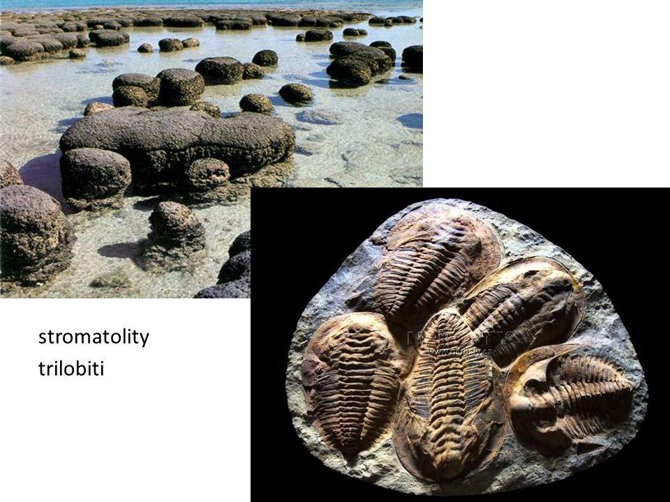 stromatolity trilobiti