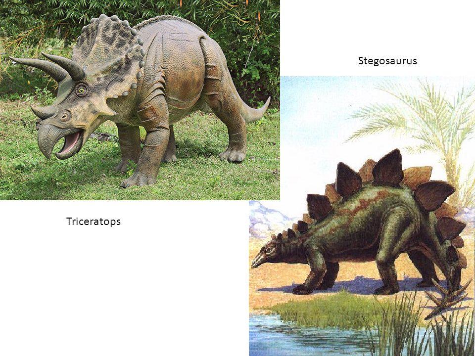 Stegosaurus Triceratops