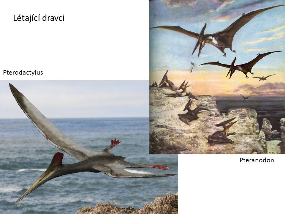 Létající dravci Pterodactylus Pteranodon
