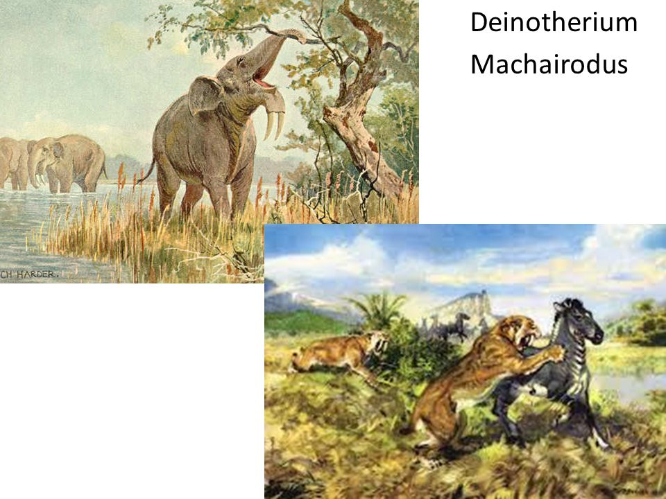 Deinotherium Machairodus