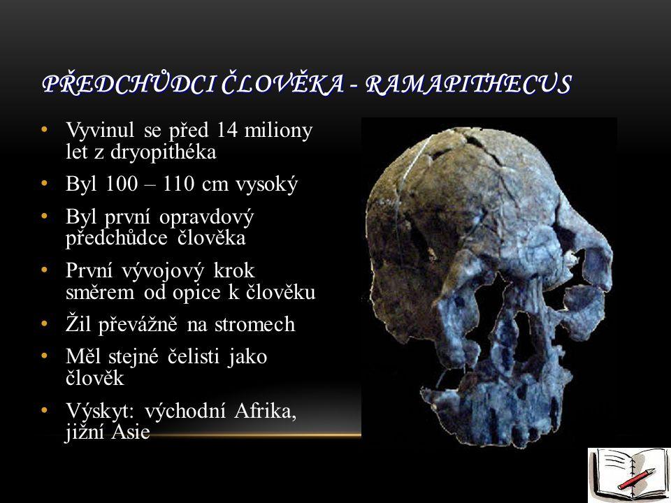 Předchůdci člověka - Ramapithecus