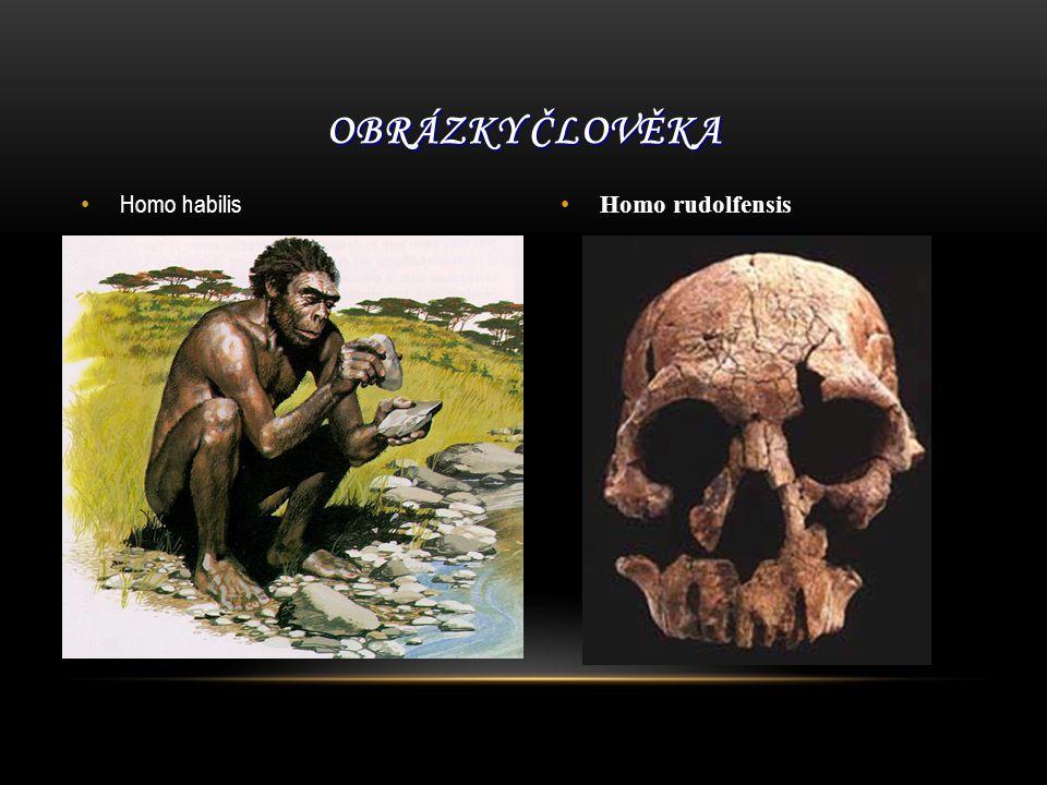Obrázky člověka Homo habilis Homo rudolfensis