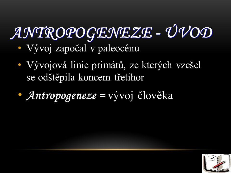Antropogeneze - úvod Antropogeneze = vývoj člověka