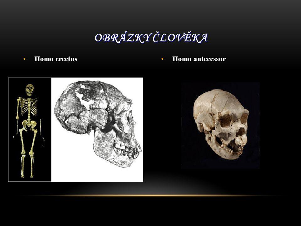 Obrázky člověka Homo erectus Homo antecessor