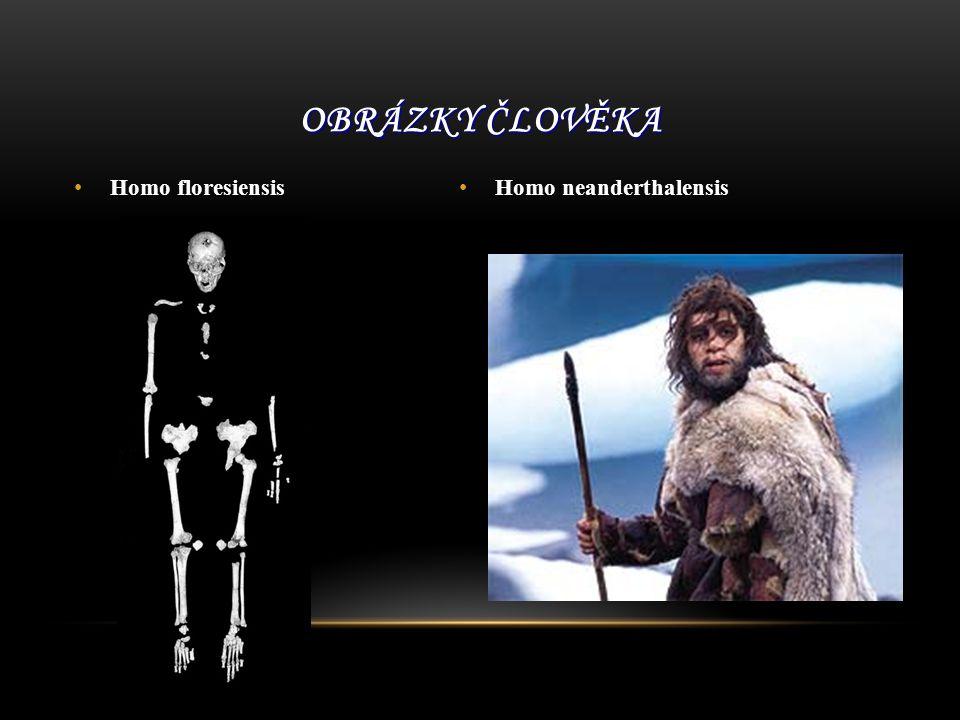 Obrázky člověka Homo floresiensis Homo neanderthalensis