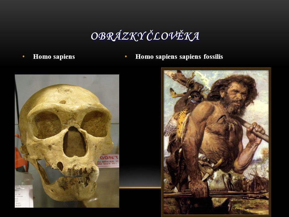 Obrázky člověka Homo sapiens Homo sapiens sapiens fossilis