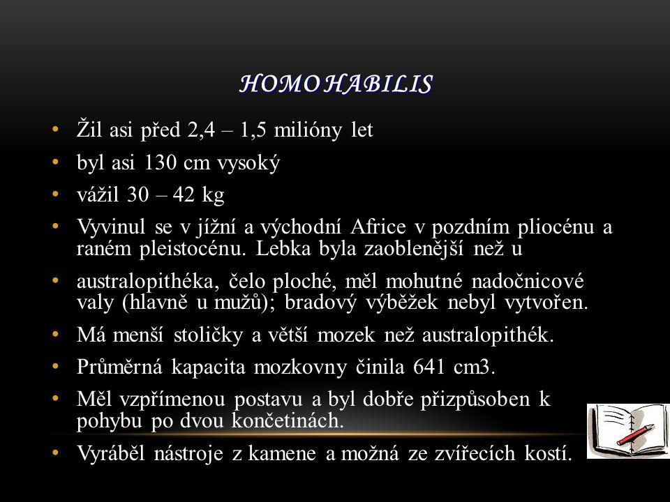 Homo habilis Žil asi před 2,4 – 1,5 milióny let byl asi 130 cm vysoký