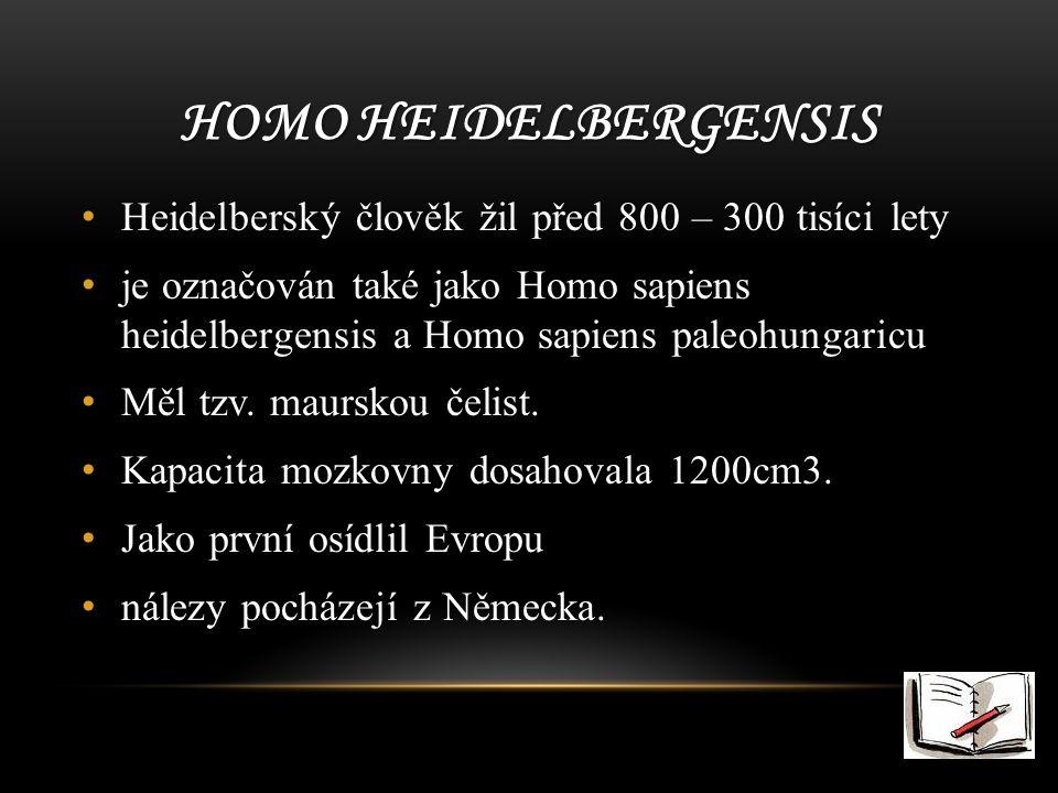 Homo heidelbergensis Heidelberský člověk žil před 800 – 300 tisíci lety.