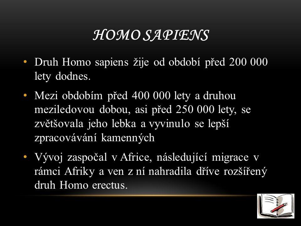 Homo sapiens Druh Homo sapiens žije od období před 200 000 lety dodnes.