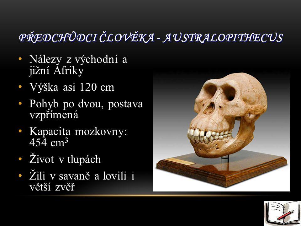 Předchůdci člověka - Australopithecus