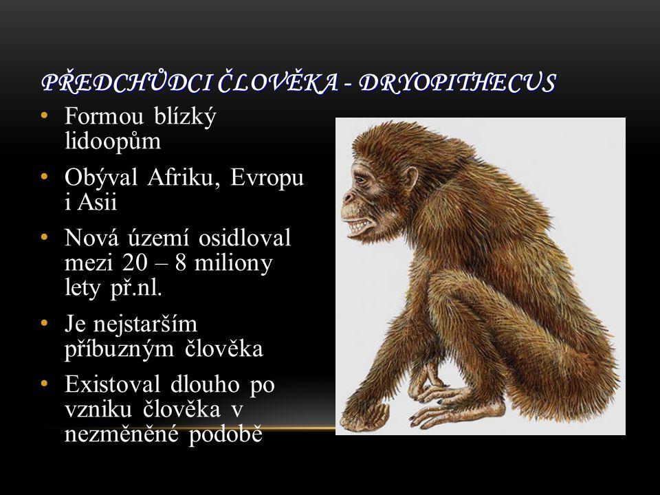 Předchůdci člověka - Dryopithecus