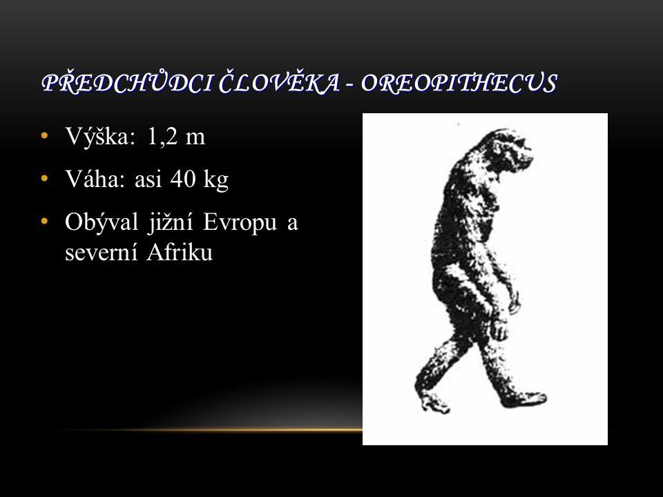 Předchůdci člověka - Oreopithecus