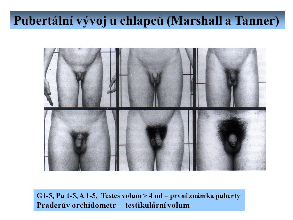 Pubertální vývoj u chlapců (Marshall a Tanner)