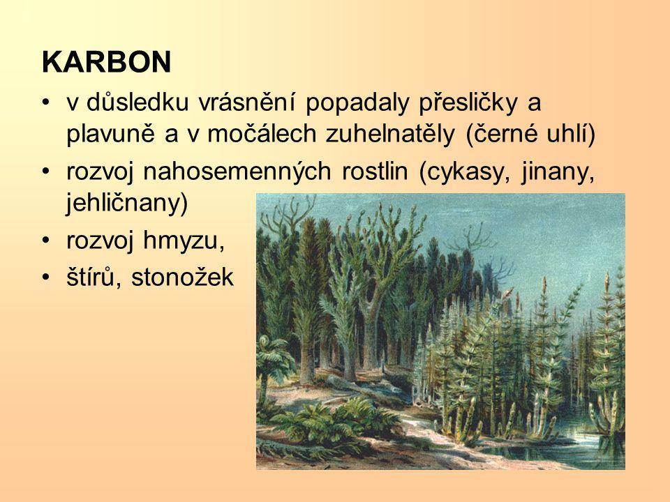 KARBON v důsledku vrásnění popadaly přesličky a plavuně a v močálech zuhelnatěly (černé uhlí)