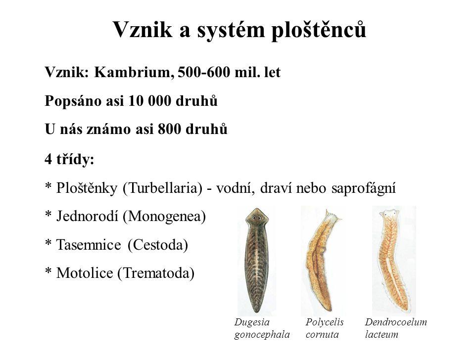 Vznik a systém ploštěnců