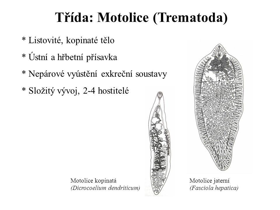 Třída: Motolice (Trematoda)