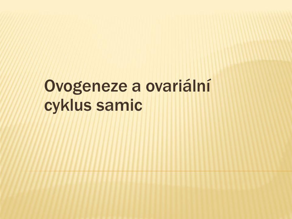 Ovogeneze a ovariální cyklus samic