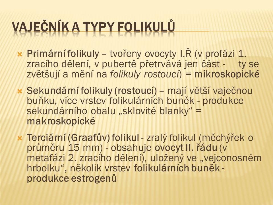 Vaječník a typy folikulů