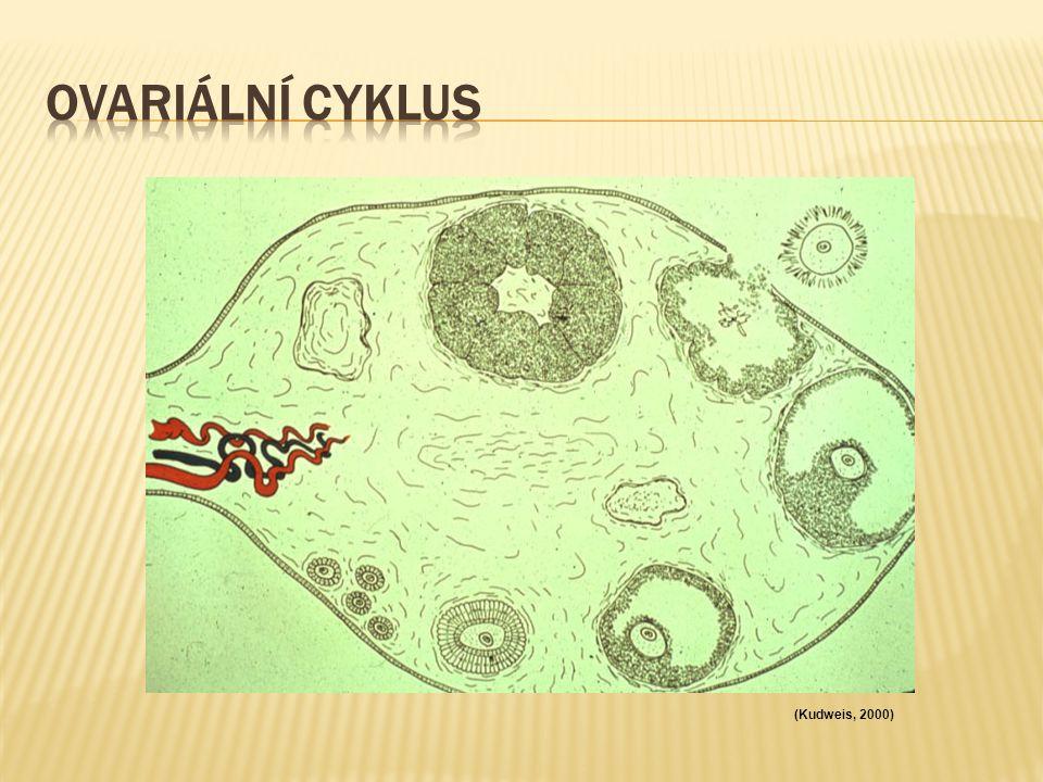 Ovariální cyklus (Kudweis, 2000)