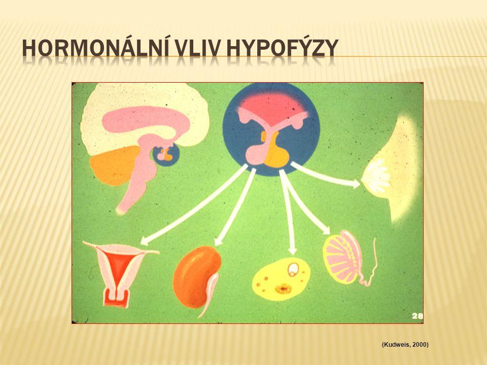 Hormonální vliv hypofýzy